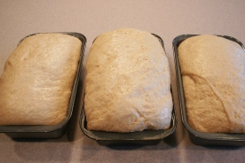 Honey Whole Wheat Bread - Unbaked Loaves