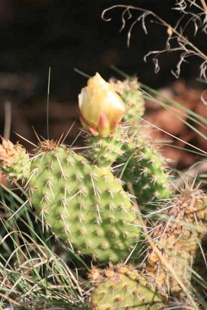 Cactus - Colorado - 2017