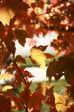 Leaf Filtered Sun