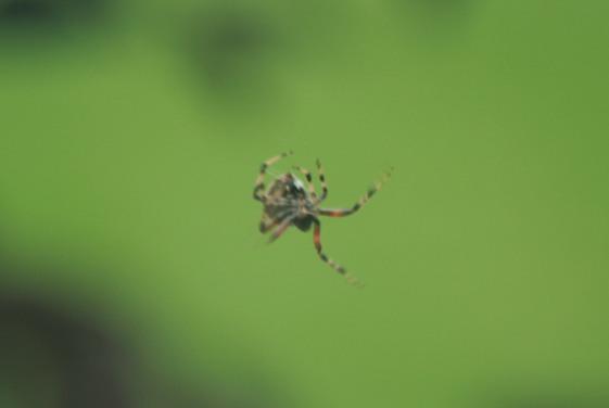 Itsy Bitsy (NOT) Spider