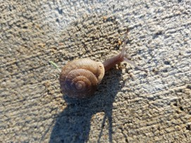 Morning Snail