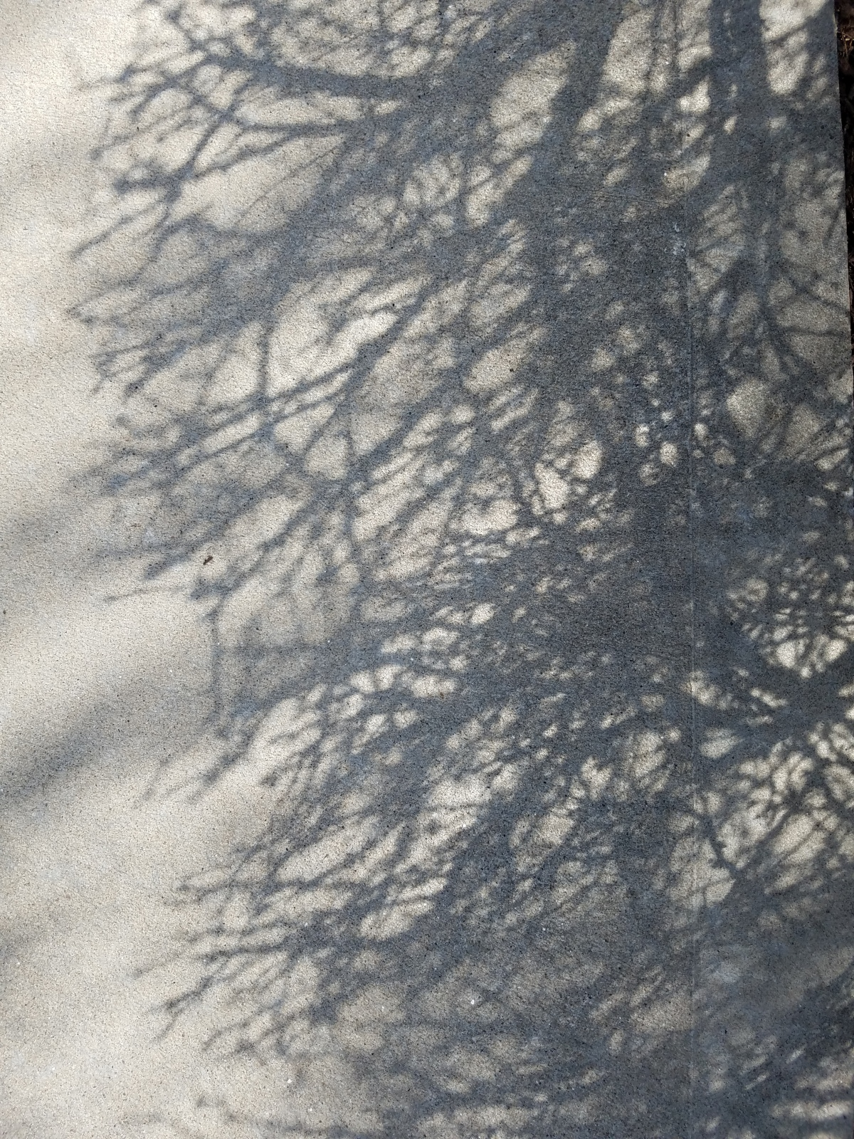 Branch Shadows