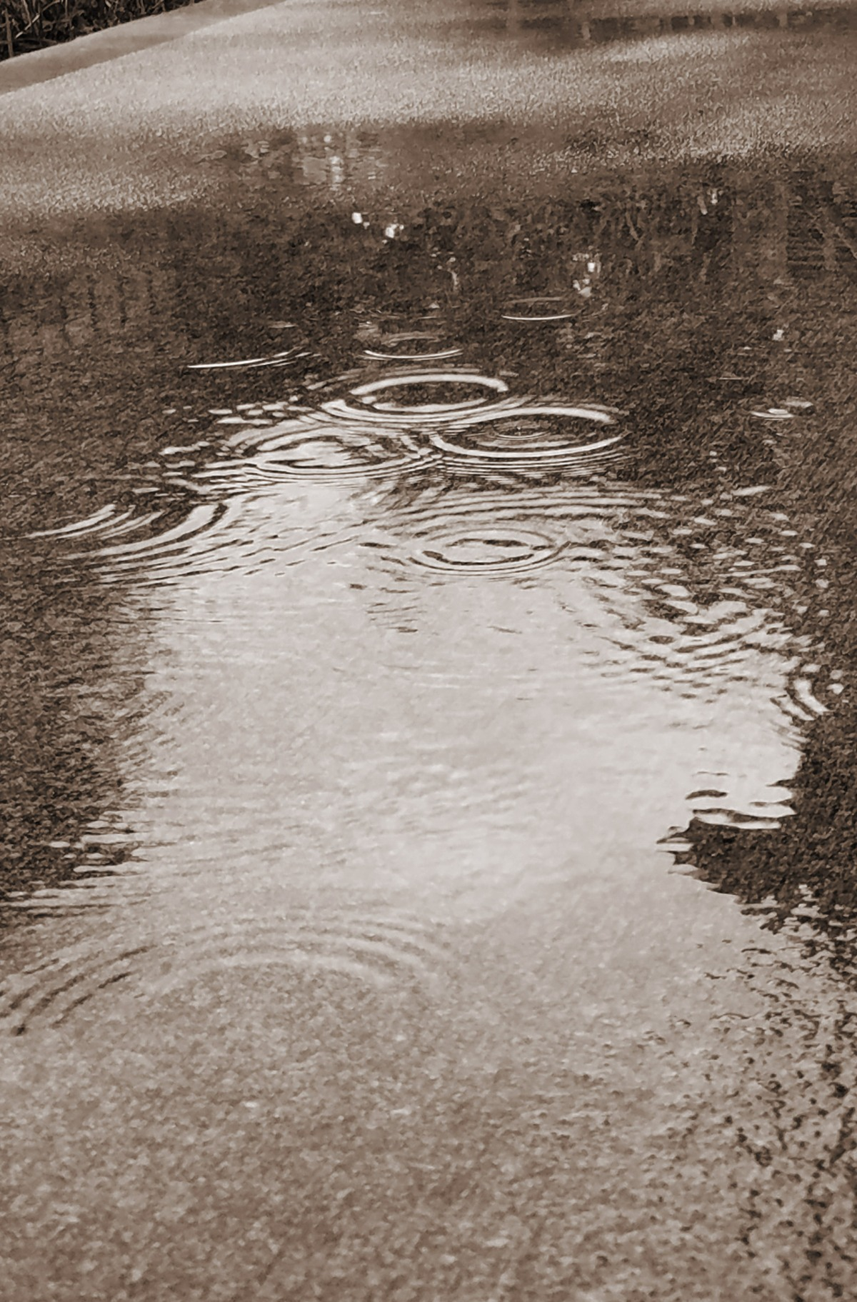 Rain Puddle - Black and White