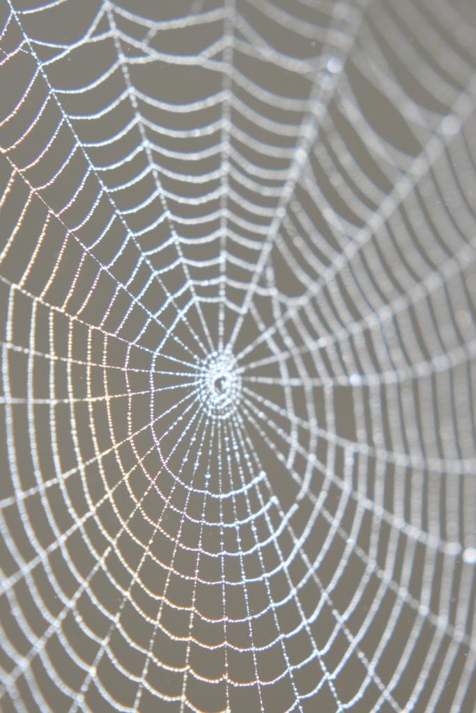 Rainbowed Spider Web