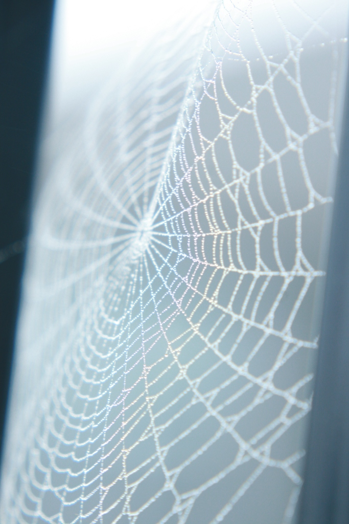 Rainbowed Spider Web
