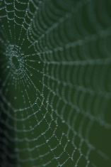 Misted Spider Web