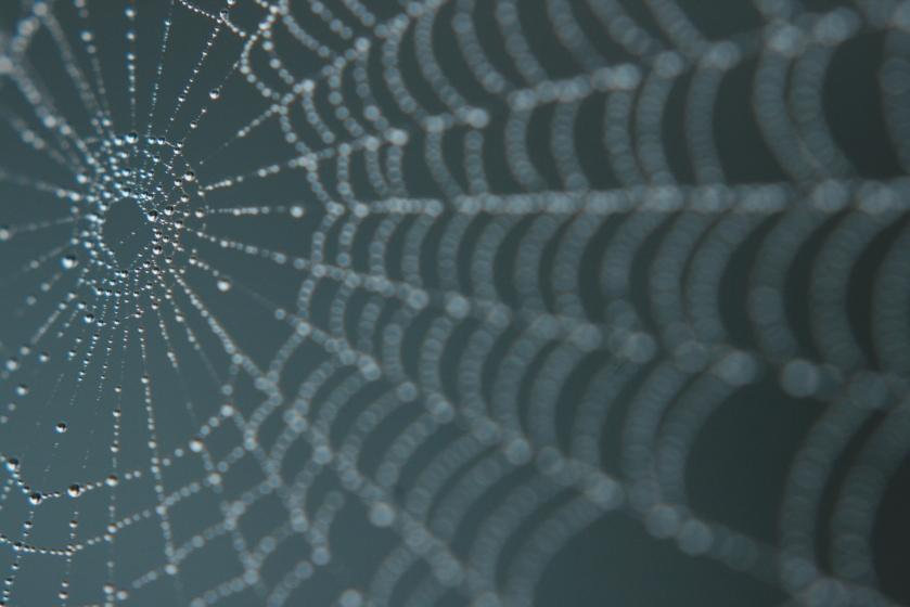 Spider Web Drops