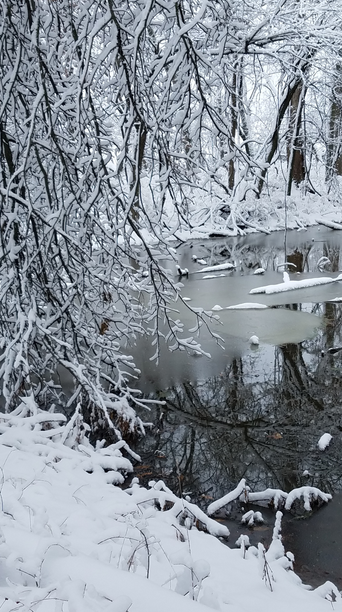 Snow Tree Pond