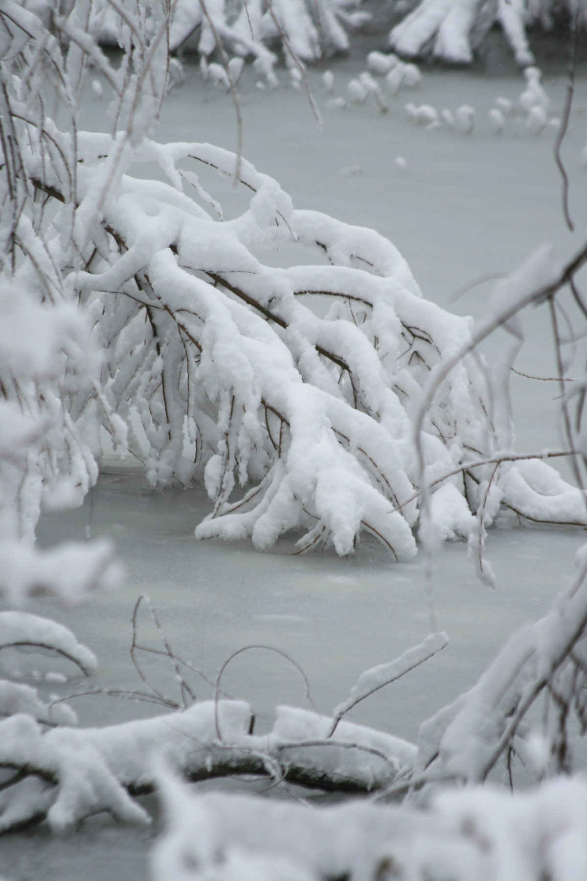 Frozen In Place