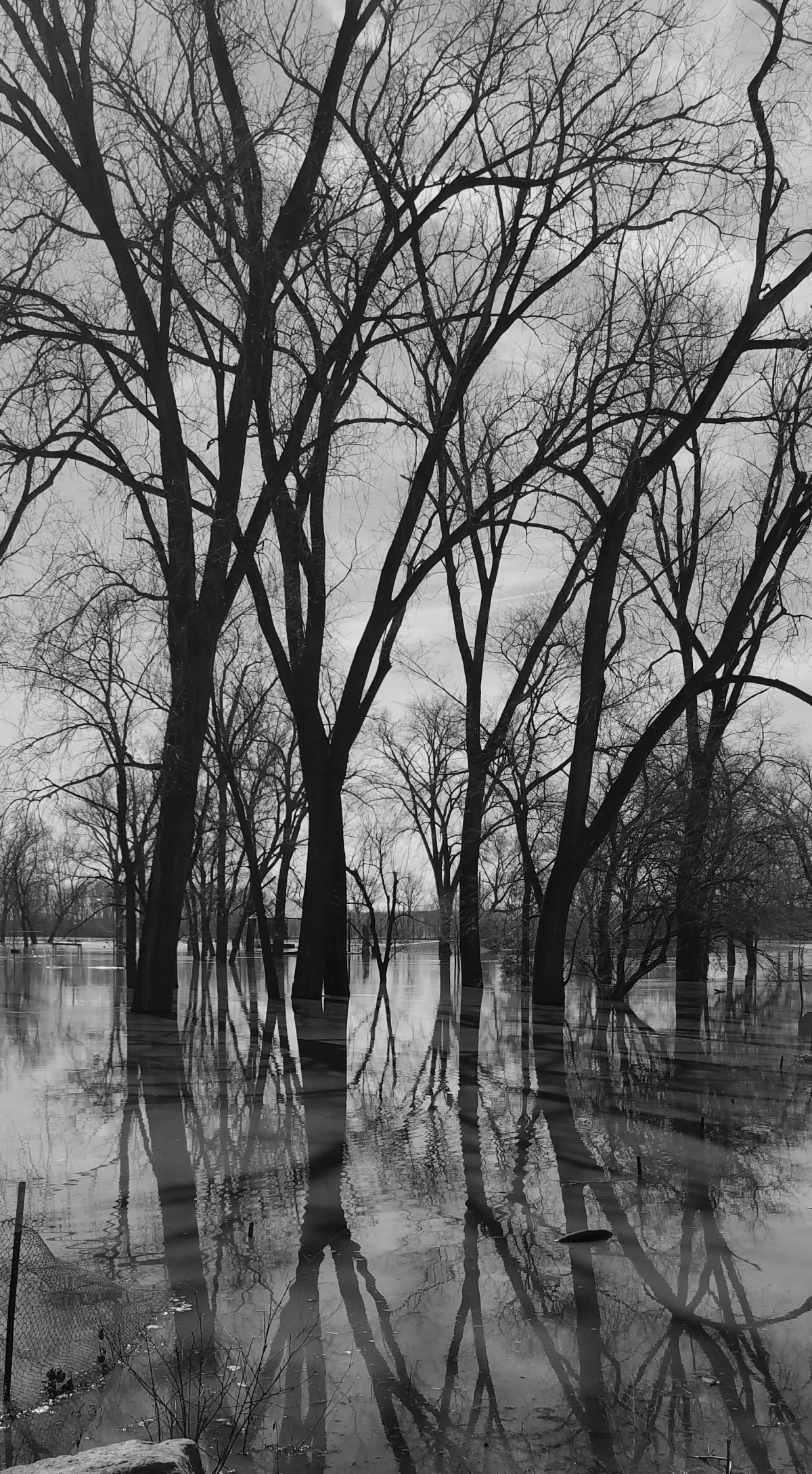 Black & White Flood