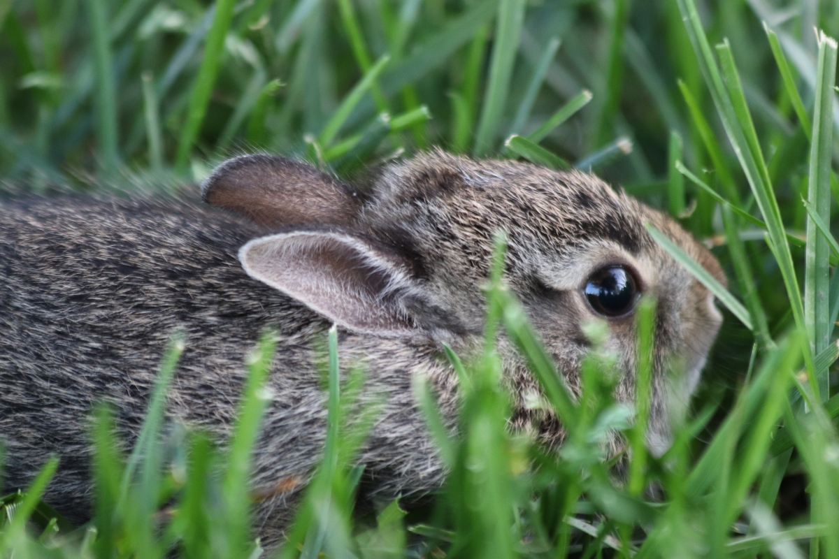 Today's Cuteness: Baby Bunny!