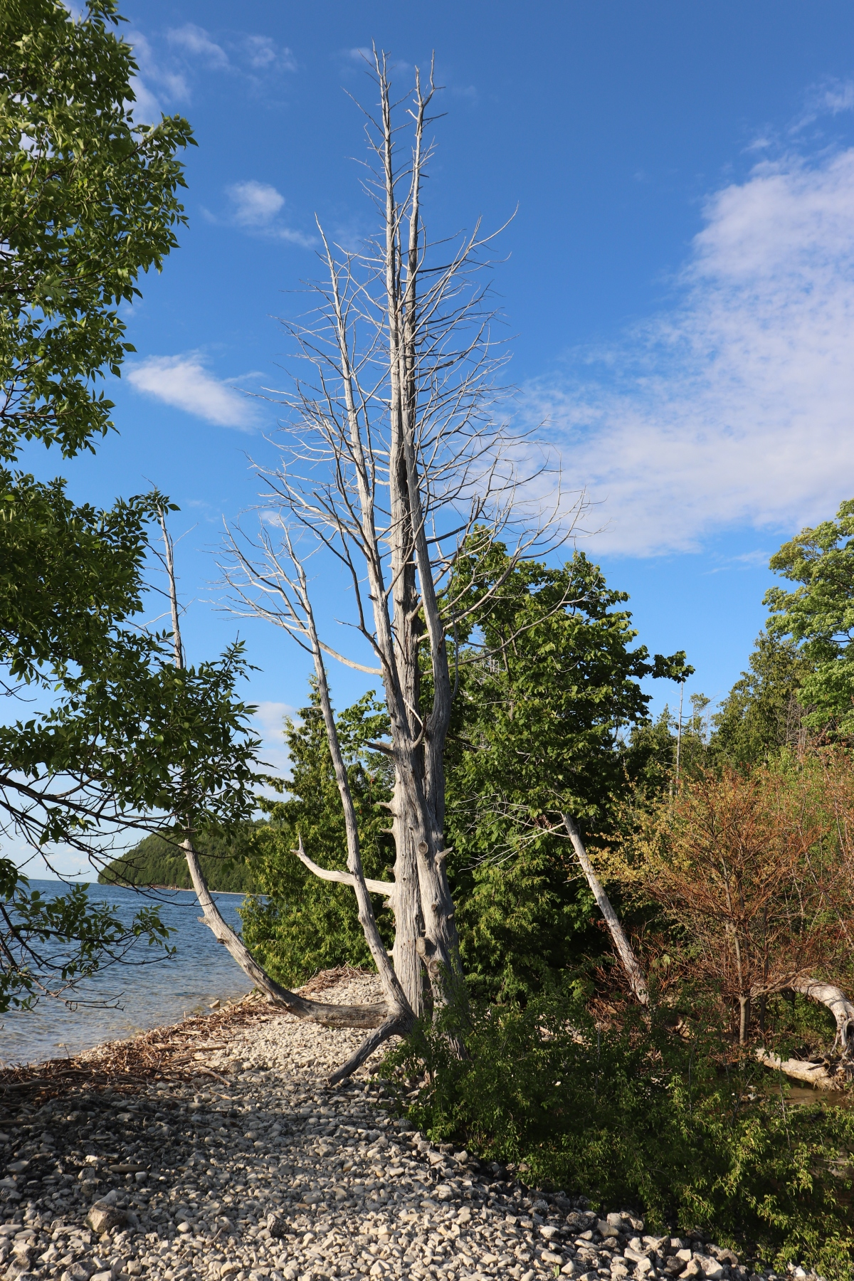 Dead Tree By The Lake