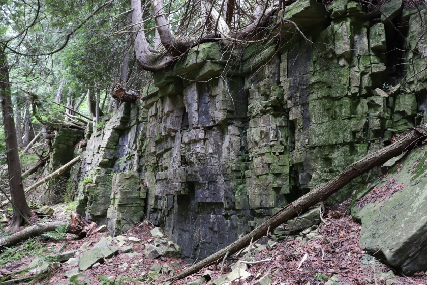 Small Rock Wall Topped In Misshapen Trees