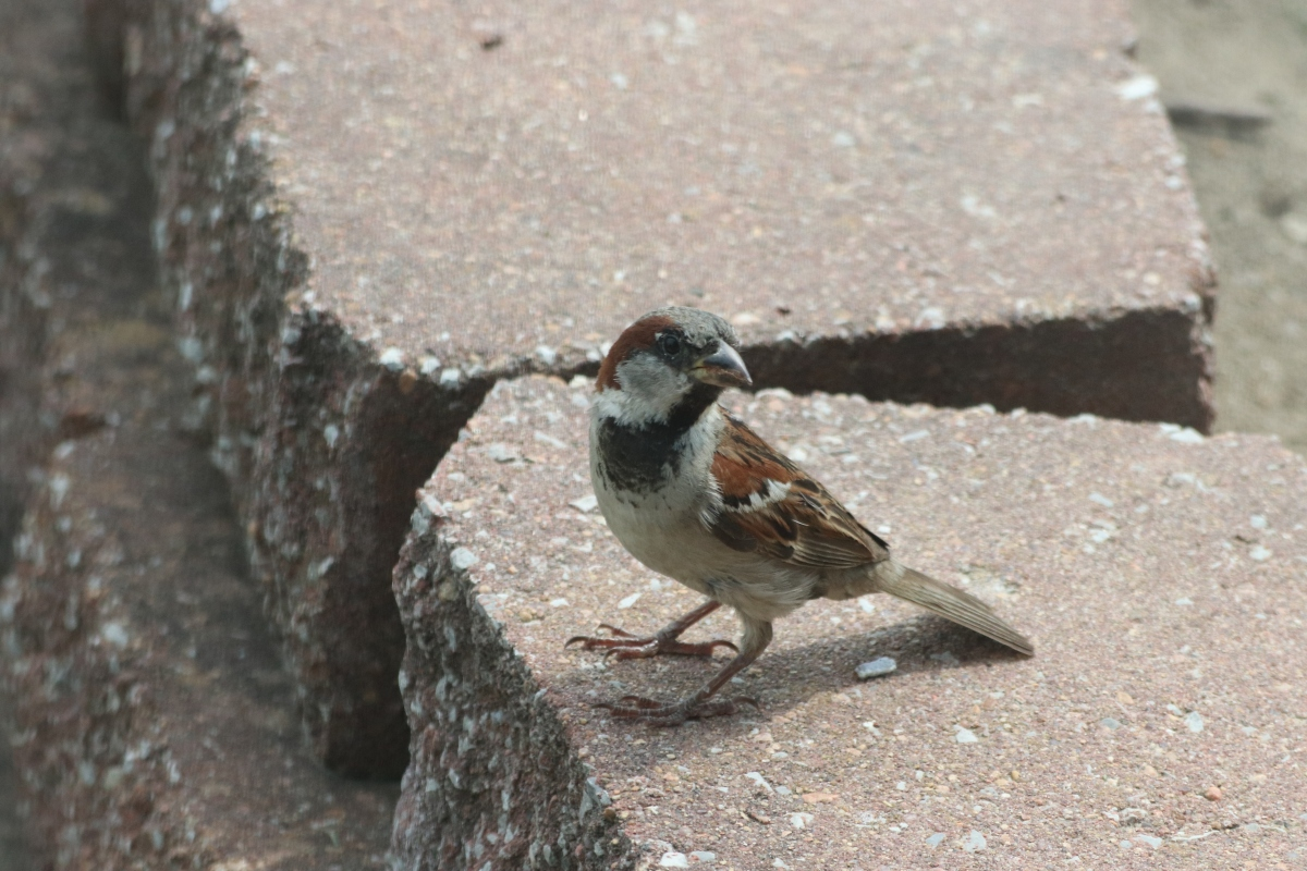 Visit From Sparrow