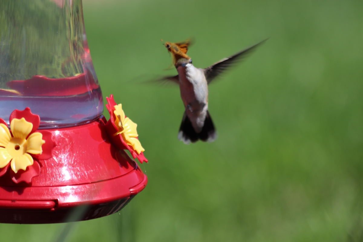 Humming Bird & Friend?