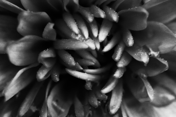 Black And White Mum
