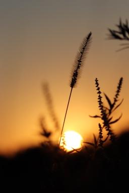 Sunset Through The Weeds