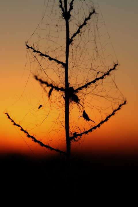Sunset Through A Web