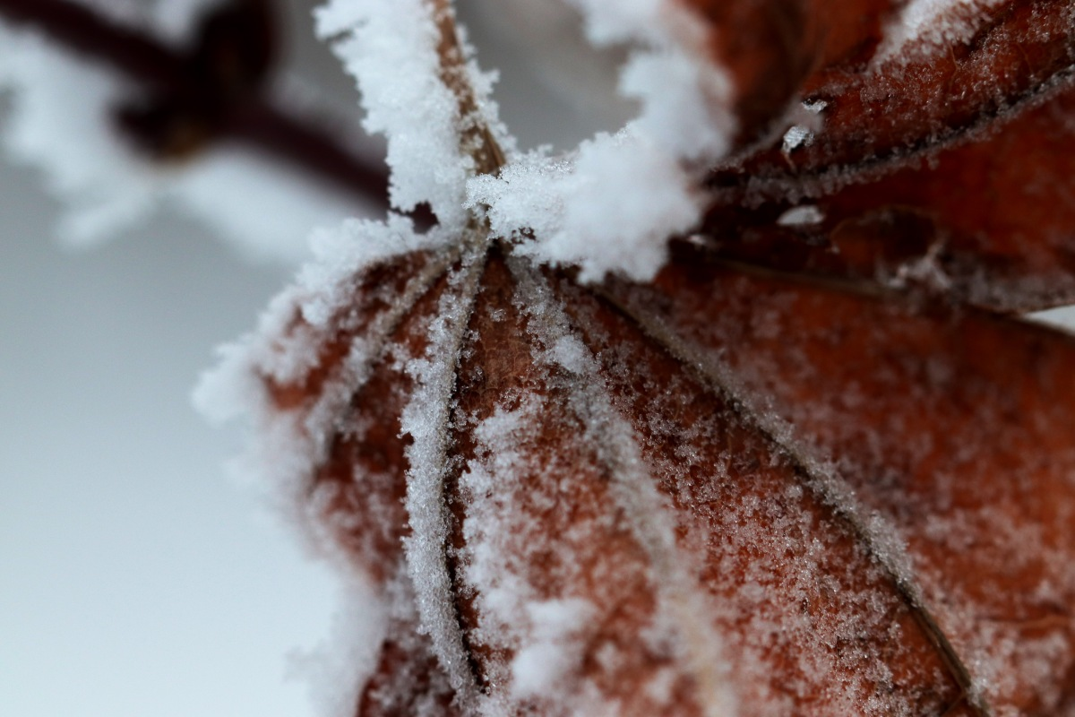 Frozen Fog On A Leaf