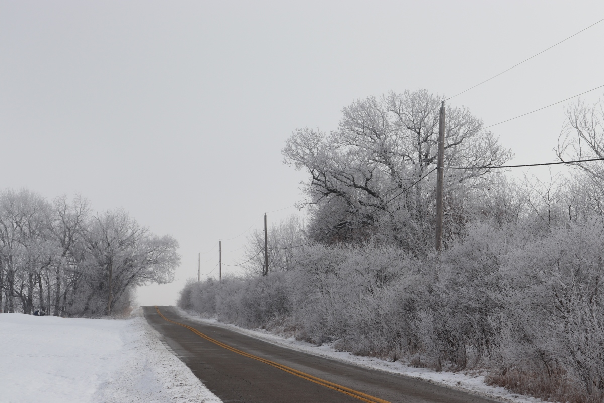 Snow and Frozen Fog Along The Road
