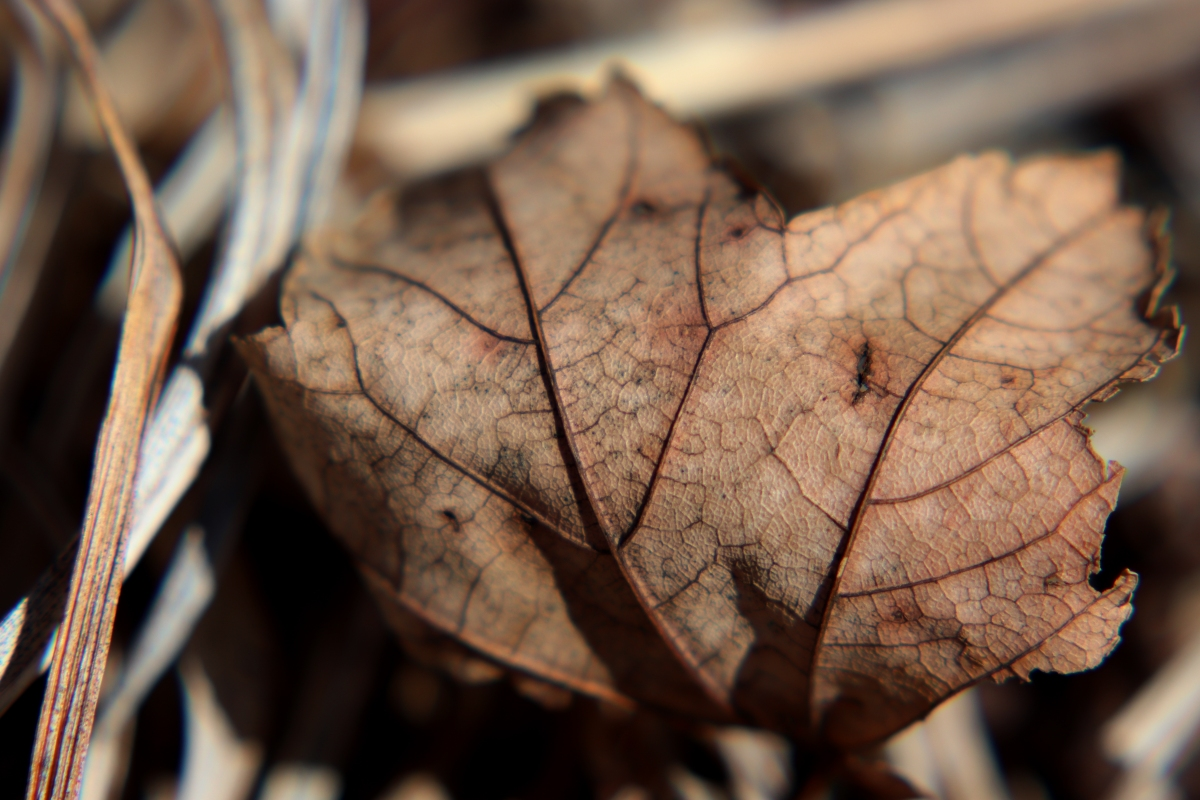Brittle Winter Veins