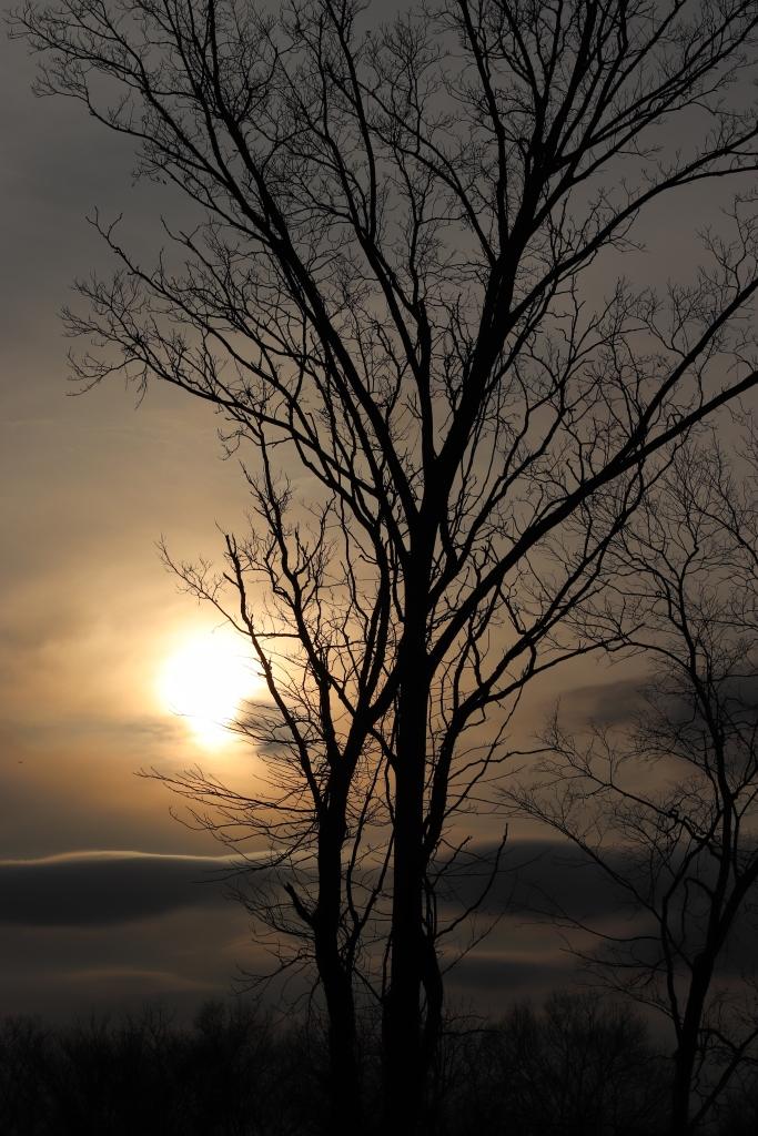 Cloudy Sun Behind Trees