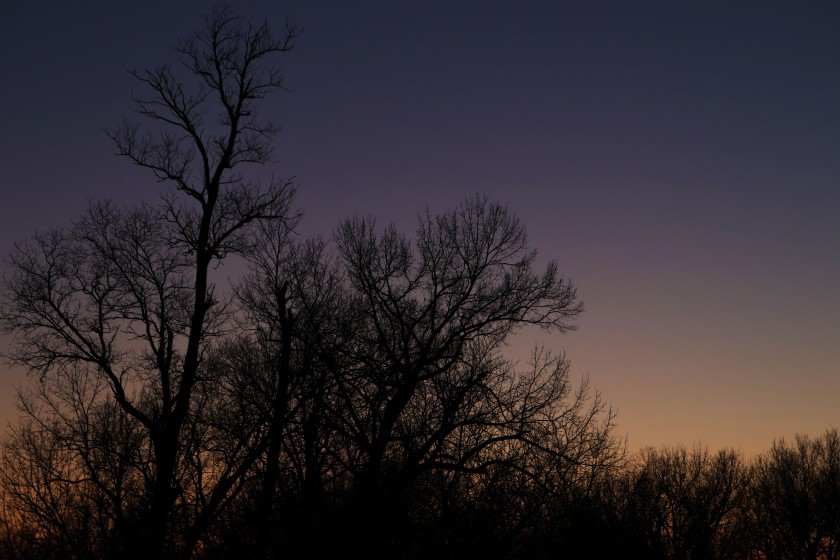 Twilight Silhouetted Trees