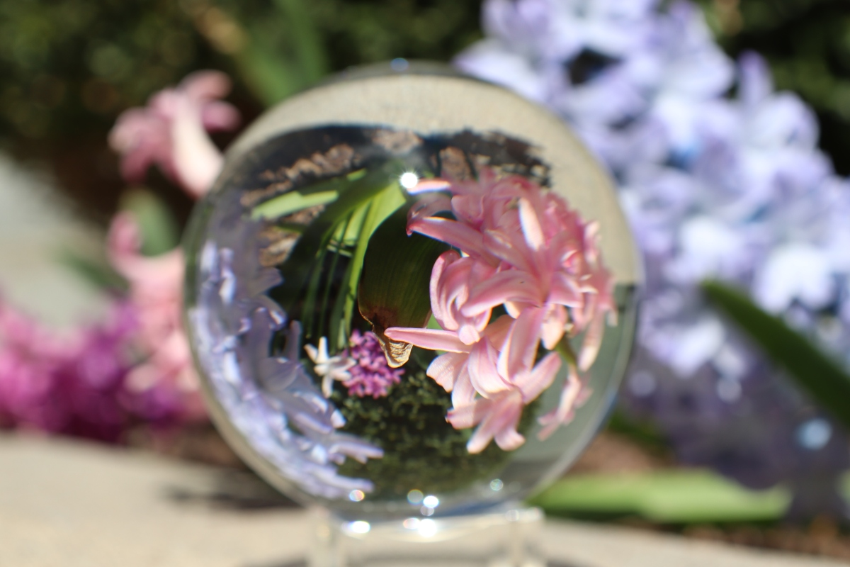 Spring Flowers Invereted in Photography Sphere