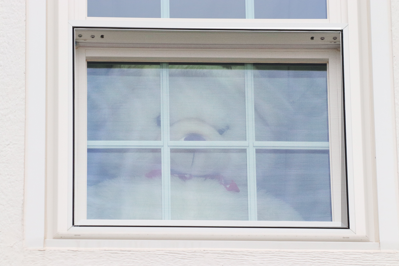 Bear Hunt - Bear In The Window