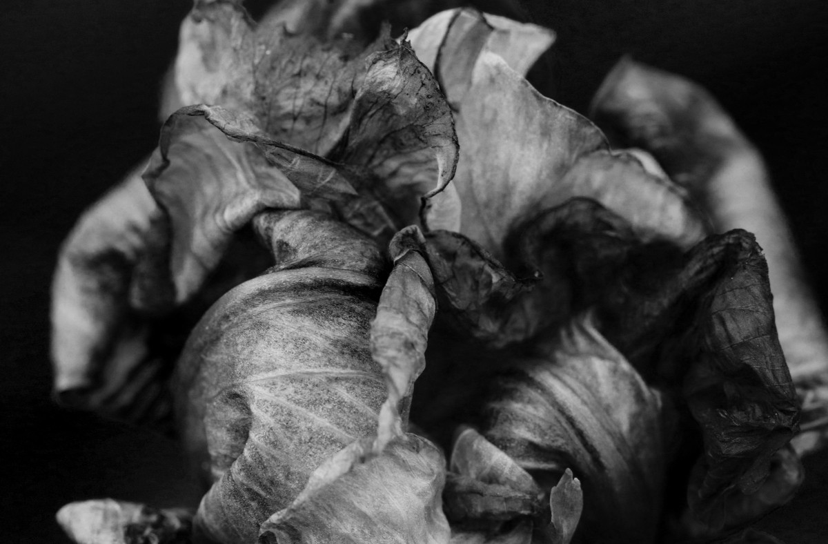 Black & White: End Of An Iris
