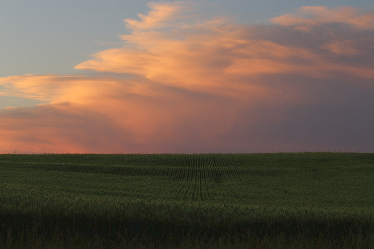 Sunset Clouds Over A Cornfield
