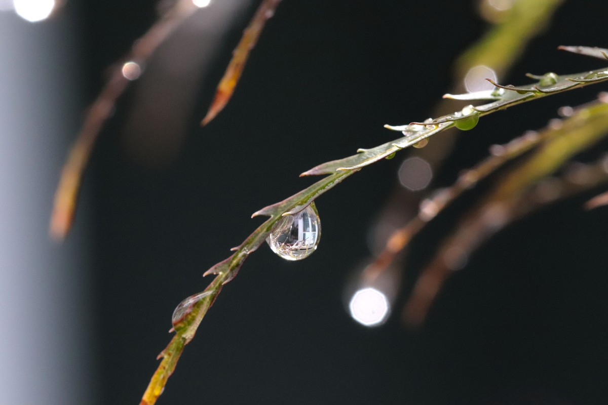 Window Reflection In Raindrop