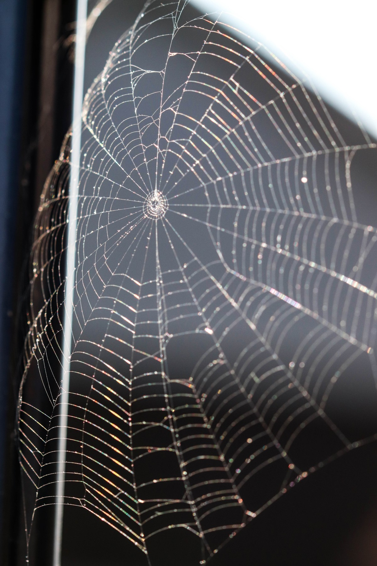Spiderweb In Morning Light