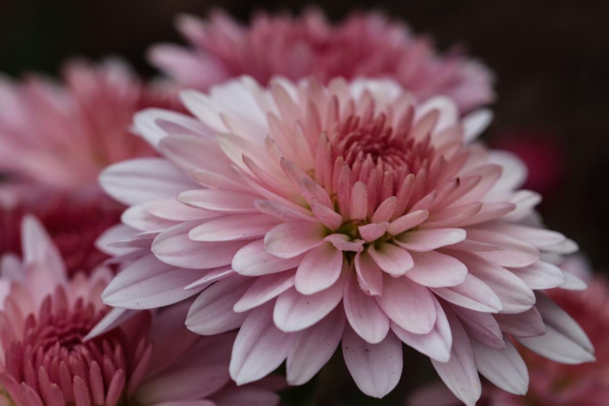 Nature's Flower Arrangement