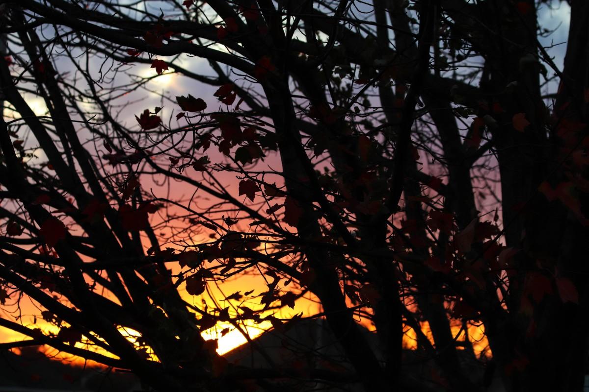 Rainbow Sunset Behind Dark Tree Branches