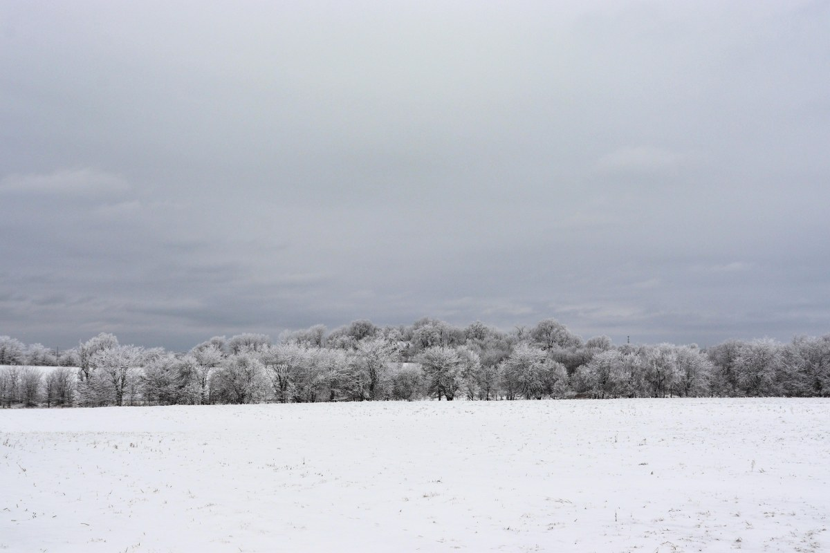 Snowy Field and Frosted Trees