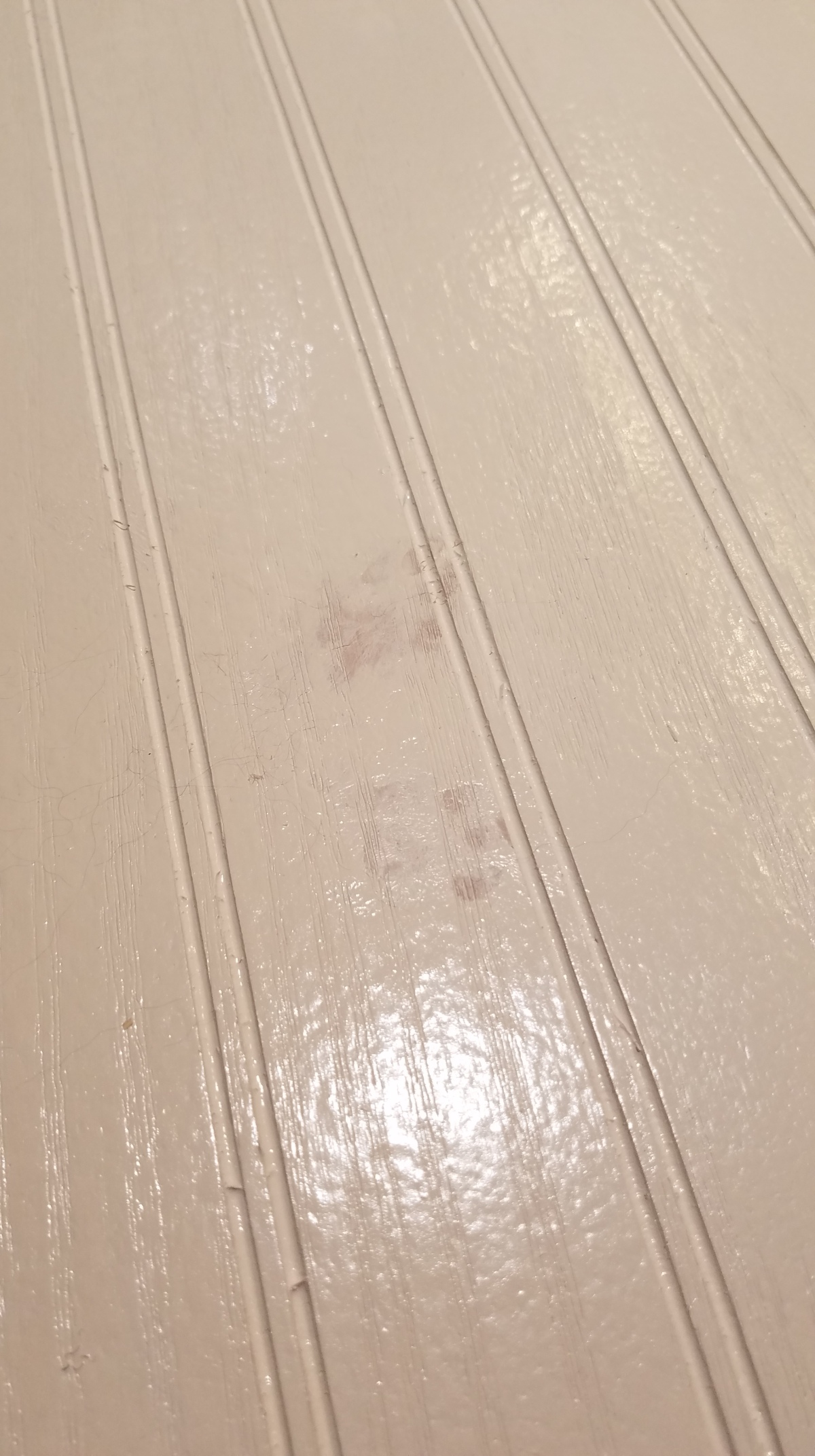 Cat Paw Prints In Fresh Paint