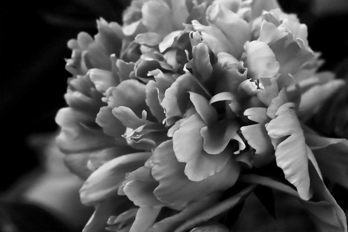 Color Series: Black & White Day2