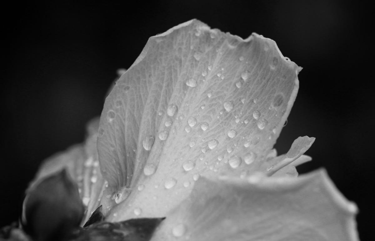 Color Series: Black & White Day3